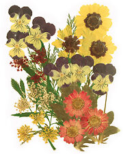 pressed flowers mixed pack, pansy marguerite lace flower foliage