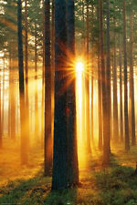 Forest Sunbeams LAMINATED POSTER Photographic Wall Art NEW Licensed Sunrise
