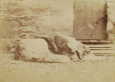 1862 and earlier | Victorian PHOTOGRAPH album inc. rare salt print of dog c1850