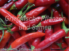 THAI HOT Chili  **** scharf + Massenernte **** 10 Samen
