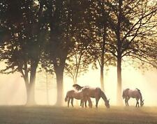 Horses in the Mist by Monte Nagle Fine Horse Art Print Poster Home Decor 657519