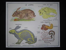 Y004 AFFICHE SCOLAIRE ECOLE ROSSIGNOL LE LAPIN LE CHEVAL BE