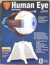 Lindberg Human Eye Oeil Humain 4X scale Anatomically Accurate Model Kit