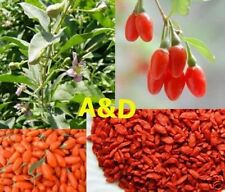 Organic Goji Berries Wolfberry 10 Pounds