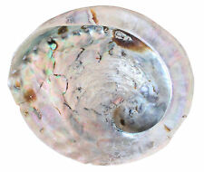 Abalone/Mother of Pearl Shell (17cm) Bathroom Soap Dish Decorative Shell