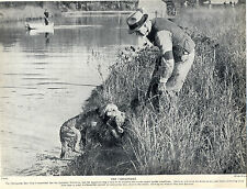 CHESAPEAKE BAY RETRIEVER WITH DUCK MAN SHOTGUN ORIGINAL DOG PRINT PAGE FROM 1934