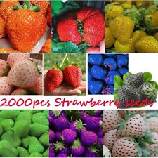 2000pcs Strawberry Seeds Delicious Sweet Giant Berry Fruit Yard Garden Planting