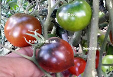 Blue Chocolate Cherry Tomato - A High-yielding, Rare, Beautiful Coloured Tomato!