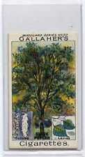 (Ja9685-100)  GALLAHER,WOODLAND TREES,BLACK POPLAR TREE,1912#50