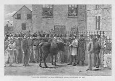 IRELAND Selling Cattle Seized for Rent at Sligo Court House - Antique Print 1881