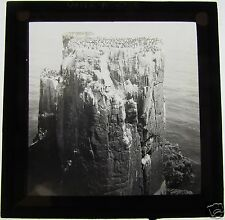Glass Magic Lantern Slide BIRDS ON A CLIFF   C1900 NORWAY