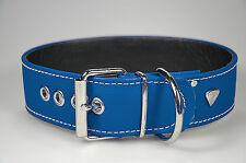 LEDASS92 Hundehalsband Leder TAYA Gr.M 50 Hunde Halsband Leder Halsband BLAU