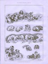 1887 LOUIS WAIN KENNEL CLUB DOG SHOW CRYSTAL PALACE