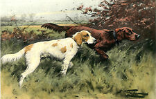 "ENGLISH & IRISH RED SETTER GUN DOG FINE ART PRINT ENGRAVING ""First of September"""
