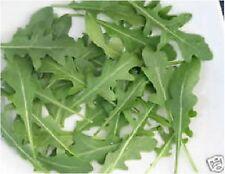 Salad - Wild Rocket - 10g/35000 Seeds - Large