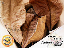 50 grams Grade A BEST GIANT INDIAN ALMOND CATAPPA KETAPANG LEAVES aquarium