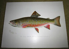 Denton FISH Print MALE BROOK TROUT 12 inches by 9 3/8 Vintage Art