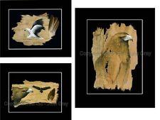 3 X PRINT SET . BULK BUY   PRINTS - SIGNED BY ARTIST - EAGLES - BARK ART
