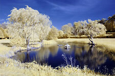 Nikon D70 infrared converted Camera 590nm Goldie Infrared Converted Camera