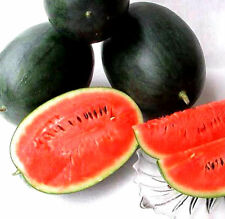 Black Diamond Watermelon! 15 Seeds! COMB. S/H! SEE MY STORE FOR RARE SEEDS!