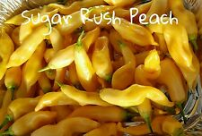 (25+) Sugar Rush Peach Pepper Seeds