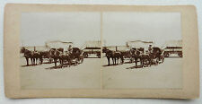 PHOTO STEREO FIN XIX ATTELAGE CHEVAUX CARRIOLE  N627
