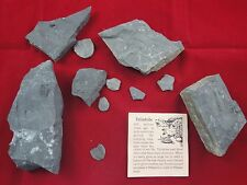 Lot of 11  Natural TRILOBITE Fossils! 600 Million Year Old Utah Wheeler Shale