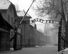 "Auschwitz German Concentration Camp 8""x 10"" World War II Photo Picture #8"