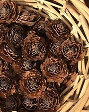 Cedar Pine/Fir Cones - Gorgeous Rose Shape - Christmas/Craft/Table/PotPourri