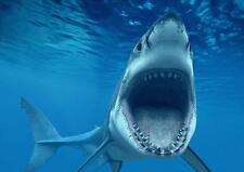 Great White Shark A3 Poster