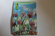 10 Flower bulbs,Cultivated,Fritillaria Meleagris#BZ37
