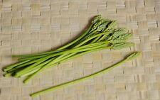 SEEDS 8 graines d' ASPERGE DES BOIS [Ornithogalum Pyrenaicum] BATH ASPARAGUS