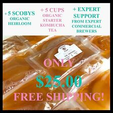 SCOBY x 5 + 5 cups of starter kombucha tea + EXPERT support + FAQ on our web.