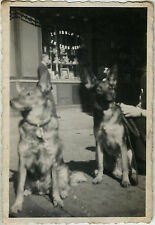 PHOTO ANCIENNE - VINTAGE SNAPSHOT - ANIMAL CHIEN FLOU BOUTIQUE VITRINE - DOG