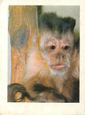 OLD CARD IMAGE : Cebus apella Sapajou apelle Tufted capuchin Pin monkey