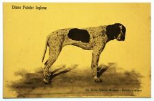 Cartolina Canile Igienico Monforte Bortolan – Diana Pointer Inglese
