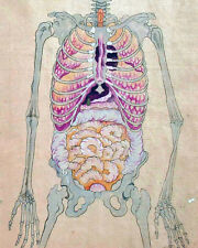 Japanese Medical Anatomical Skeleton Painting 8x10 Real Canvas Giclee Art Print