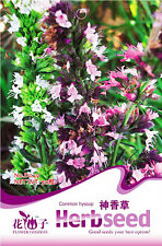 1 Pack 50 Common Hyssop Seeds HysSopus Officinalis D029