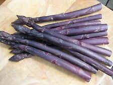 10-PURPLE-PASSION-Asparagus-Plants-2 year Roots-HUGE Crowns
