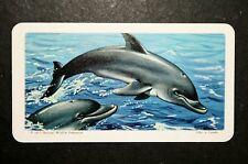 Bottle nosed Dolphin     Illustrated Card   VGC
