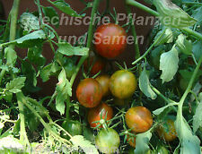 TUMBLING RED STRIPED suspendu(e) Tomate 10 graines variété ancienne Balcon Pot