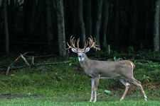 12 lbs Winter Wheat Seed Deer Food Plot / Garden Cover Crop FREE SHIPPING