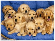 4Set Golden Retriever Dog Puppy Puppies Dogs #8 Greeting Notecards / Envelopes