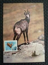 Romania MK 1971 camosci Gämse Chamois ANIMALI ANIMALS carte MAXIMUM CARD MC cm c930