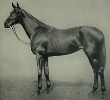 Lord Stanley Racehorse Quashed Winner Of Ascot Gold Cup 1936 Photo Article 7230