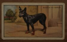 VINTAGE~GALLAHER~CIGARETTE~CARDS~DOGS~NUMBER~No~#~44~X1~b18