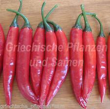 GOAT HORN Chili Paprika* Klassiker aus Asien * 10 Samen