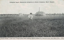 Bend OR * Irrigated Land 1908 Deschutes Irrigation & Power Co. Alfalfa Field