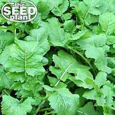 Seven Top Turnip Seeds - 500 SEEDS NON-GMO