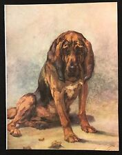 Original 1934 Colour Dog Print / Bookplate - BLOODHOUND